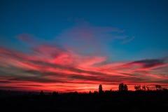 όμορφο δασικό ηλιοβασίλ&ep Στοκ εικόνα με δικαίωμα ελεύθερης χρήσης