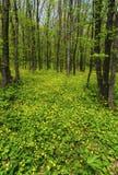 Όμορφο δασικό τοπίο άνοιξη Στοκ Φωτογραφίες