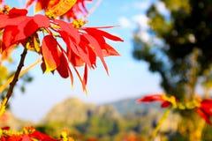 Όμορφο αφηρημένο ζωηρόχρωμο λουλούδι Στοκ φωτογραφίες με δικαίωμα ελεύθερης χρήσης