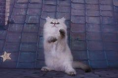 Όμορφο βρετανικό μακρυμάλλες γατάκι στη στέγη το καλοκαίρι κοντά Στοκ φωτογραφία με δικαίωμα ελεύθερης χρήσης