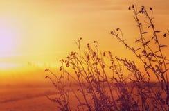 όμορφο γίνοντα διάνυσμα φύσης ανασκόπησης Στοκ φωτογραφία με δικαίωμα ελεύθερης χρήσης