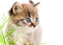 όμορφο γατάκι Στοκ φωτογραφίες με δικαίωμα ελεύθερης χρήσης