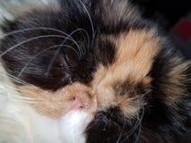 Όμορφο γατάκι στοκ εικόνες