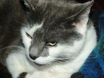 Όμορφο γατάκι στοκ εικόνα