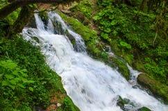Όμορφο γρήγορο ρεύμα ροής καταρρακτών γάλακτος ταπετσαριών Δύσκολος ποταμός βουνών Καύκασου στο δασικό καταρράκτη Isichenko, Guam Στοκ φωτογραφία με δικαίωμα ελεύθερης χρήσης