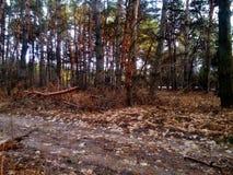 όμορφο δάσος ανασκόπησης δέντρο λεπτομέρειας Στοκ Φωτογραφία