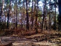 όμορφο δάσος ανασκόπησης δέντρο λεπτομέρειας Στοκ εικόνα με δικαίωμα ελεύθερης χρήσης