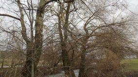 όμορφο δάσος ανασκόπησης οι ακτίνες ανασκόπησης κλείνουν να καταρρίψουν το δέντρο επάνω Τοπίο φύσης ξύλων Στοκ Φωτογραφίες