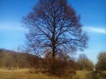 όμορφο δάσος ανασκόπησης Ταπετσαρία σύστασης δέντρων Στοκ φωτογραφία με δικαίωμα ελεύθερης χρήσης