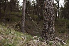 Όμορφο δάσος δέντρων Στοκ Εικόνες