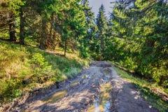 Όμορφο δάσος πεύκων νεράιδων παλαιό στα ξημερώματα στο φως του ήλιου ΙΙ Στοκ εικόνες με δικαίωμα ελεύθερης χρήσης