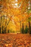 όμορφο δάσος πτώσης φθινο& Στοκ Εικόνες