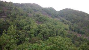 Όμορφο δάσος σε Gunungkidul Στοκ Εικόνα
