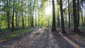 Όμορφο δάσος στην ηλιόλουστη ημέρα Δύο άνθρωποι περπατούν μακριά φιλμ μικρού μήκους