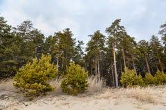 Όμορφο δάσος στη Σιβηρία στοκ εικόνες