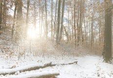 Όμορφο δάσος το χειμώνα με τις ακτίνες ήλιων Στοκ Εικόνες