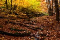 Όμορφο δάσος 17 φθινοπώρου Στοκ φωτογραφία με δικαίωμα ελεύθερης χρήσης