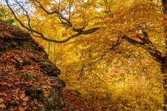 Όμορφο δάσος 10 φθινοπώρου Στοκ φωτογραφίες με δικαίωμα ελεύθερης χρήσης