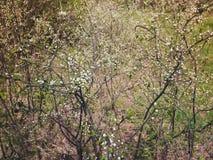Όμορφο δέντρο ένα δέντρο της Apple στο λουλούδι Στοκ φωτογραφίες με δικαίωμα ελεύθερης χρήσης