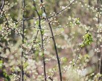 Όμορφο δέντρο ένα δέντρο της Apple στο λουλούδι Στοκ Φωτογραφίες