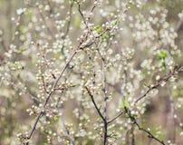 Όμορφο δέντρο ένα δέντρο της Apple στο λουλούδι Στοκ φωτογραφία με δικαίωμα ελεύθερης χρήσης