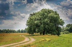Όμορφο δέντρο κοντά στον του χωριού δρόμο στον τομέα κάτω από το νεφελώδη ουρανό Στοκ Φωτογραφία