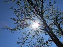 Όμορφο δέντρο μηλιάς στο μπλε ουρανό Στοκ Εικόνες