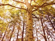 Όμορφο δέντρο σε ένα πάρκο σε μια ήρεμη πόλη στοκ φωτογραφία με δικαίωμα ελεύθερης χρήσης