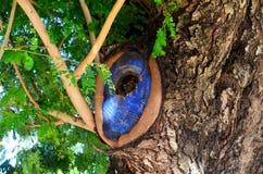 Όμορφο δέντρο στη φύση Στοκ φωτογραφία με δικαίωμα ελεύθερης χρήσης