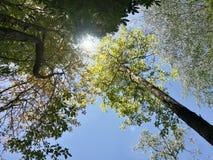 Όμορφο δέντρο στο δάσος στο υπόβαθρο μπλε ουρανού Στοκ Εικόνα