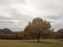 Όμορφο δέντρο φύλλων φθινοπώρου έξω από το σαφή νεφελώδη ουρανό τοπίων Στοκ Εικόνα