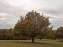 Όμορφο δέντρο φύλλων φθινοπώρου έξω από το σαφή νεφελώδη ουρανό τοπίων Στοκ εικόνα με δικαίωμα ελεύθερης χρήσης