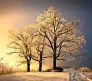 όμορφο δέντρο Στοκ εικόνα με δικαίωμα ελεύθερης χρήσης