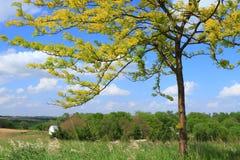 όμορφο δέντρο στοκ φωτογραφίες