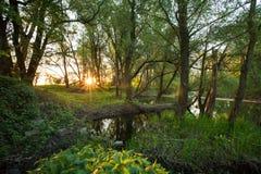 όμορφο δασικό παρόχθιο τοπίο στοκ εικόνες με δικαίωμα ελεύθερης χρήσης