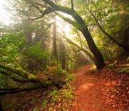 όμορφο δασικό πολύβλαστο πρωί στοκ φωτογραφίες με δικαίωμα ελεύθερης χρήσης