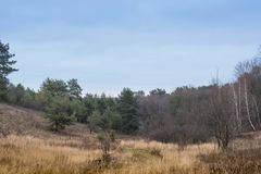 όμορφο δασικό τοπίο Δέντρα φθινοπώρου στο δάσος στοκ φωτογραφία
