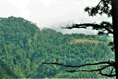Όμορφο δασικό τοπίο στην κορυφή βουνών στοκ φωτογραφίες
