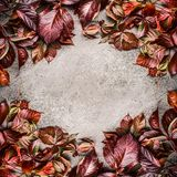 Όμορφο δημιουργικό κόκκινο πλαίσιο σχεδιαγράμματος φύλλων φθινοπώρου στο γκρίζο υπόβαθρο πετρών Εποχιακή έννοια πτώσης Στοκ φωτογραφία με δικαίωμα ελεύθερης χρήσης