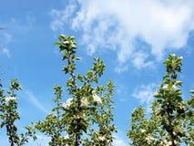 όμορφο διάνυσμα δέντρων απεικόνισης μήλων Στοκ εικόνα με δικαίωμα ελεύθερης χρήσης