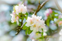 όμορφο διάνυσμα δέντρων απεικόνισης μήλων Στοκ Εικόνα