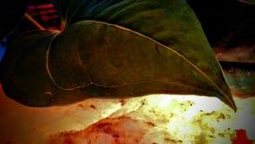Όμορφο ειρηνικό φύλλο με το λεπτό ρόδινο μαλακό πέτρινο φως στοκ φωτογραφίες με δικαίωμα ελεύθερης χρήσης