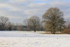 Όμορφο εκτεταμένο τοπίο με τα μεγάλα δέντρα με ένα κάλυμμα χιονιού το χειμώνα Στοκ Εικόνες