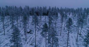 Όμορφο εναέριο βίντεο των δέντρων στο δάσος στη Σουηδία φιλμ μικρού μήκους