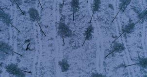 Όμορφο εναέριο βίντεο των δέντρων στο δάσος στη Σουηδία απόθεμα βίντεο
