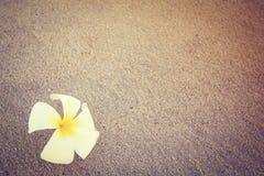 Όμορφο ενιαίο λουλούδι που απομονώνεται στην κενή παραλία (εκλεκτής ποιότητας ύφος) Στοκ φωτογραφία με δικαίωμα ελεύθερης χρήσης