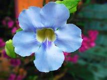 όμορφο εξωτικό λουλούδ&iota Στοκ Εικόνες