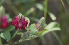 Όμορφο λεπτό άγριο λουλούδι σε ένα πράσινο θολωμένο υπόβαθρο Στοκ Εικόνες