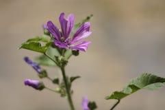 Όμορφο λεπτό άγριο λουλούδι σε ένα πράσινο θολωμένο υπόβαθρο Στοκ φωτογραφίες με δικαίωμα ελεύθερης χρήσης