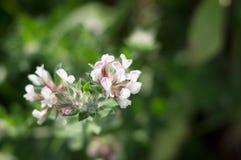 Όμορφο λεπτό άγριο λουλούδι σε ένα πράσινο θολωμένο υπόβαθρο Στοκ φωτογραφία με δικαίωμα ελεύθερης χρήσης